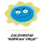 germ_norwalk
